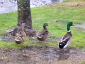 Great weather for ducks part 2