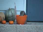 Squirrel Trick or Treating in East Troy