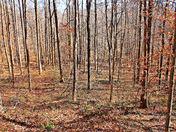 Woodland Scene#9