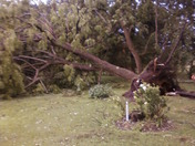Tree down in West Bangor NY