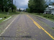 leavs striped off treas in road from hail storm
