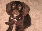My little girl Lexi