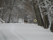 Deer near Fremont
