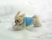 Stewie - Snow Feb 2009