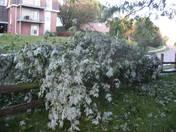 june 27th 2008 storm (13).JPG