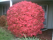How about this Bush?