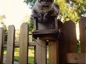 MAX THE BIRD WATCHER