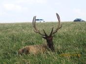 elk at ashland safari park