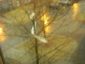 104th and hamilton, siding in a tree
