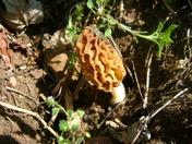 Moral mushroom