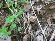 Moral mushroom 2