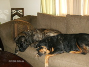 Large Couch Potato Lap Warmers