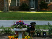 Guarding Moms' Garden