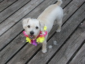 Maggie dressed up for Luau