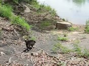 end of lee creek