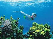 Snorkling the Great Barrier Reef