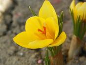 Spring has sprung 001.JPG
