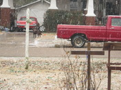 snow in Mulberry