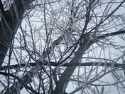 standing under ice covered tree