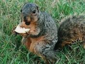 happy front yard squirrel