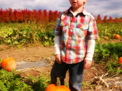 pumpkin patch 007.jpg