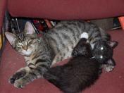 Malleck And Maisy