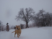1/29/2010 Dog loves to play in snow