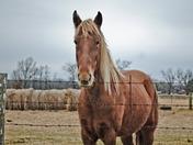 A gorgeous horse...