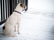 Allie lovin the snow!