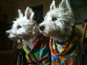 Merry Christmas from our Westies!