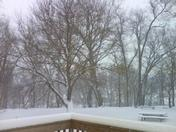 beautiul snowy backyard 2