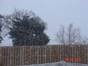 snow jan 2010 004.jpg