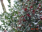 snow jan 2010 005.jpg