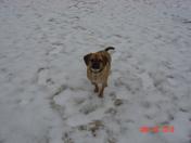 snow jan 2010 001.jpg