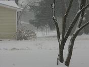 January 29, 2010 winter in Pea Ridge ARK