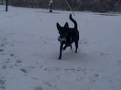 Sadie loves the snow