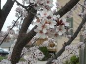 2010-04-10 001 2010-04-10 002.JPG