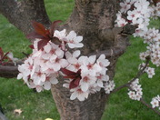 Spring in Auburn