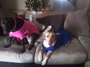 What a Wonderful day for our Snuggies!