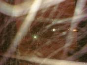 Blizzard Dec 8 2009