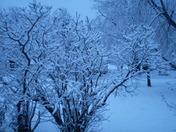 Holy Toledo More Snow in Prairie Grove