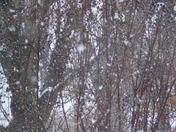 Snow Storm in Prairie Grove