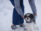Puppy's First Snow