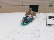 sledding with the dogs