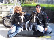 holiday biker dogs