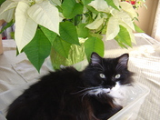 Our cat Sylvester!