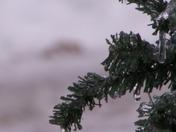 Ice on Christmas Tree