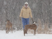 jan and Boxers in the snow