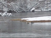 Ducks in the Snow