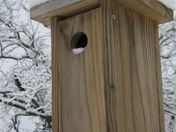 birdhouse with snow